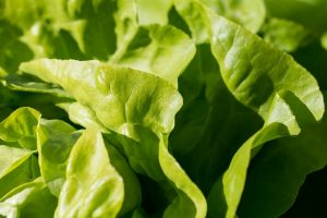 some lettuce used to make a great lean meal