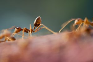 a close up of ants