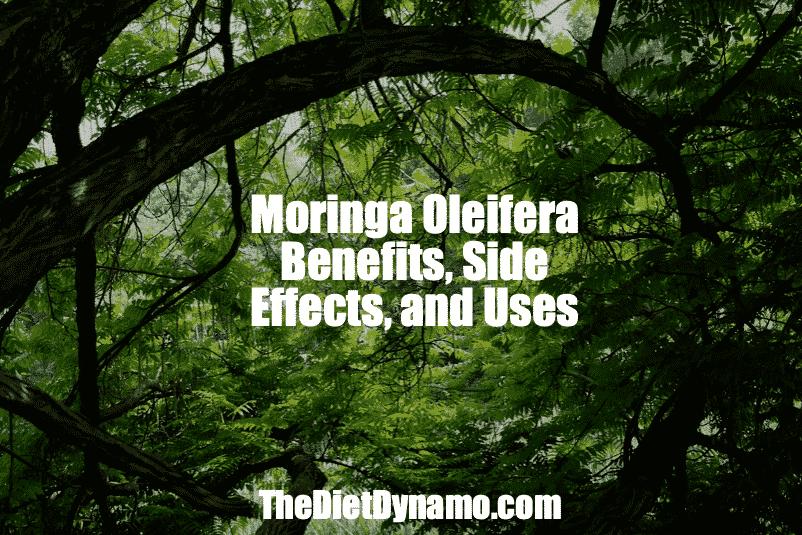 Moringa Oleifera Tree Powder Benefits Side Effects And Uses
