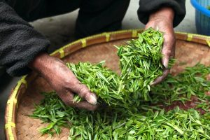 a man dries some tea for detox drink
