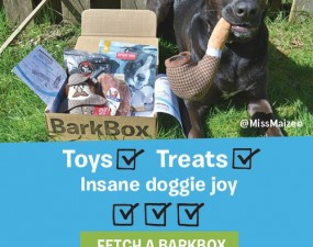 the best bark box deals