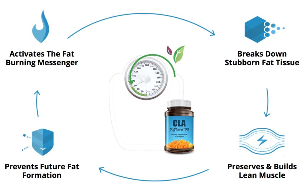 an infographic showing how cla safflower oil works