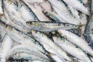 pacific sardines are a healthy seafood option